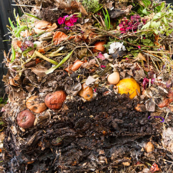 Compost-154974536-340x340