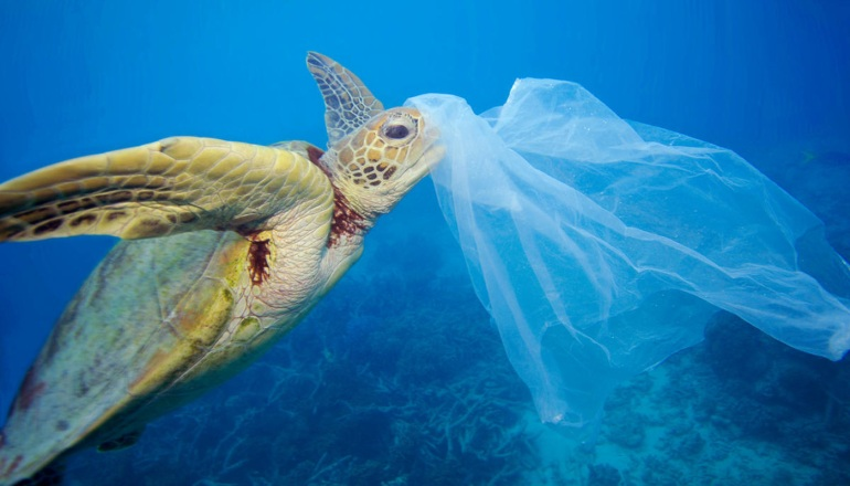 img-green-sea-turtle-with-plastic-bag-Great-Barrier-Reef-1400x800